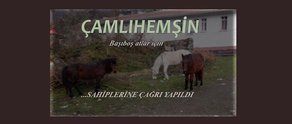 Çamlıhemşin'de Başıboş Atlar Tehlike Saçıyor