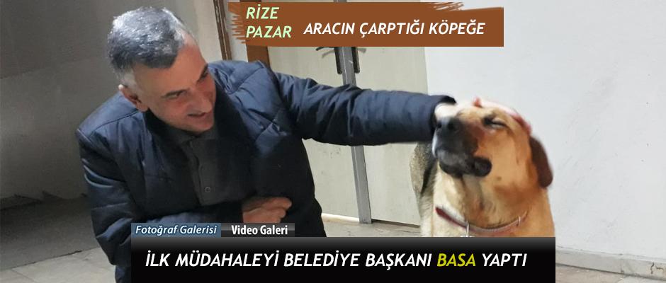 Rize-Pazar'da aracın çarptığı Köpeğe ilk müdahale Başkan Basa'dan yapıldı