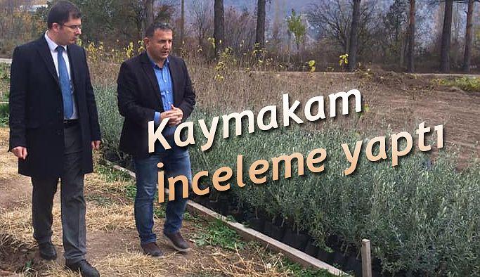 Kaymakam Ömer Özbay, Orman İşletme Müdürlüğünün Bazı Çalışma Sahalarında İncelemelerde Bulundu