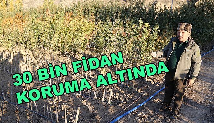YENİ YERLEŞİM YERİ İÇİN 30 BİN MEYVE FİDANI KORUMA ALTINA ALINDI
