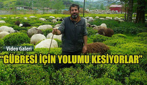 Çoban, gitmeyince darılıyorlar: