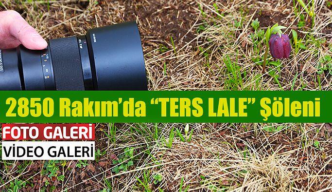 KAÇKAR'IN AĞLAYAN GELİNİ; TERS LALELER