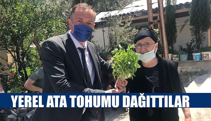 YEREL ATA TOHUM FİDESİ DAĞITIMI BAŞLADI