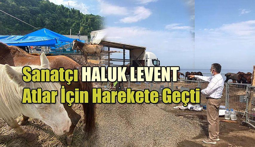 Belediye ve sanatçı Haluk Levent Hopa'da ölüme terk edilen atlar için harekete geçti