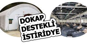 DOKAP KAPSAMINDA DOĞAL İSTİRİDYE MANTARI ÜRETİMİ BAŞLADI...