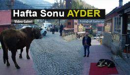 """Ayder """"SON BAHAR' ı yaşıyor."""