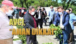Milletvekili AVCI: Maske ve sosyal mesafe kurallarına dikkat
