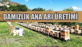 ARICILIK PROJELERİNE YERİNDE ZİYARET EDİLDİ