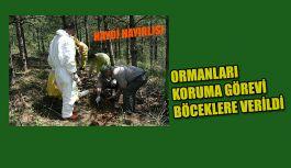 ORMANLARI KORUMA GÖREVİ BÖCEKLERE VERİLDİ.