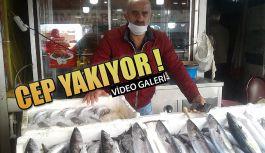 Rize'de Balık, CEP Yakıyor.