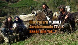 Pazarlı Telatar Çiftlik Kurdu