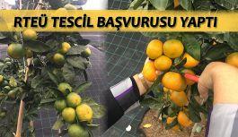 RTEÜ Üniversitesi Rize Mandalinasının Tescil Başvurusunu Yaptı