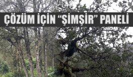 Şimşir Ormanları Tehlike Altında