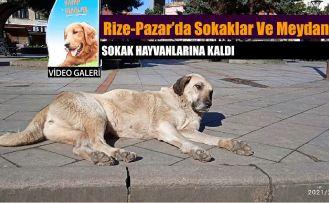 Pazar 'da Meydan Sokak Hayvanlarına Kaldı