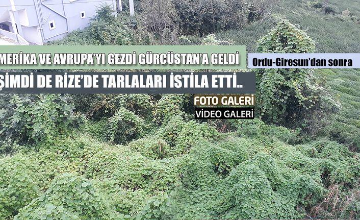 Yabani bitkiler endişe veriyor.