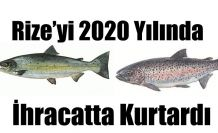 RİZE'DE 2020 İHRACATINI KARADENİZ SOMONU KURTARDI.