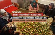"""Rize'de Organik Vadide  """"İMECE"""" yayıngalşıyor"""