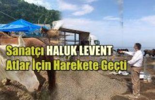 Belediye ve sanatçı Haluk Levent Hopa'da ölüme...